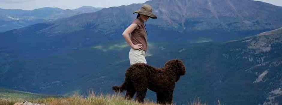Our Labradoodle Families | Rocky Mountain Labradoodles